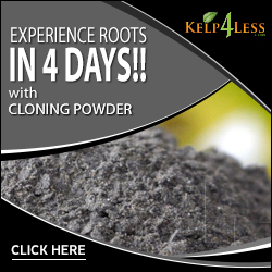 Shop Cloning Powder