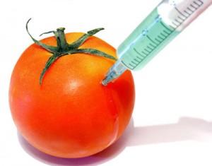 GMO Foods