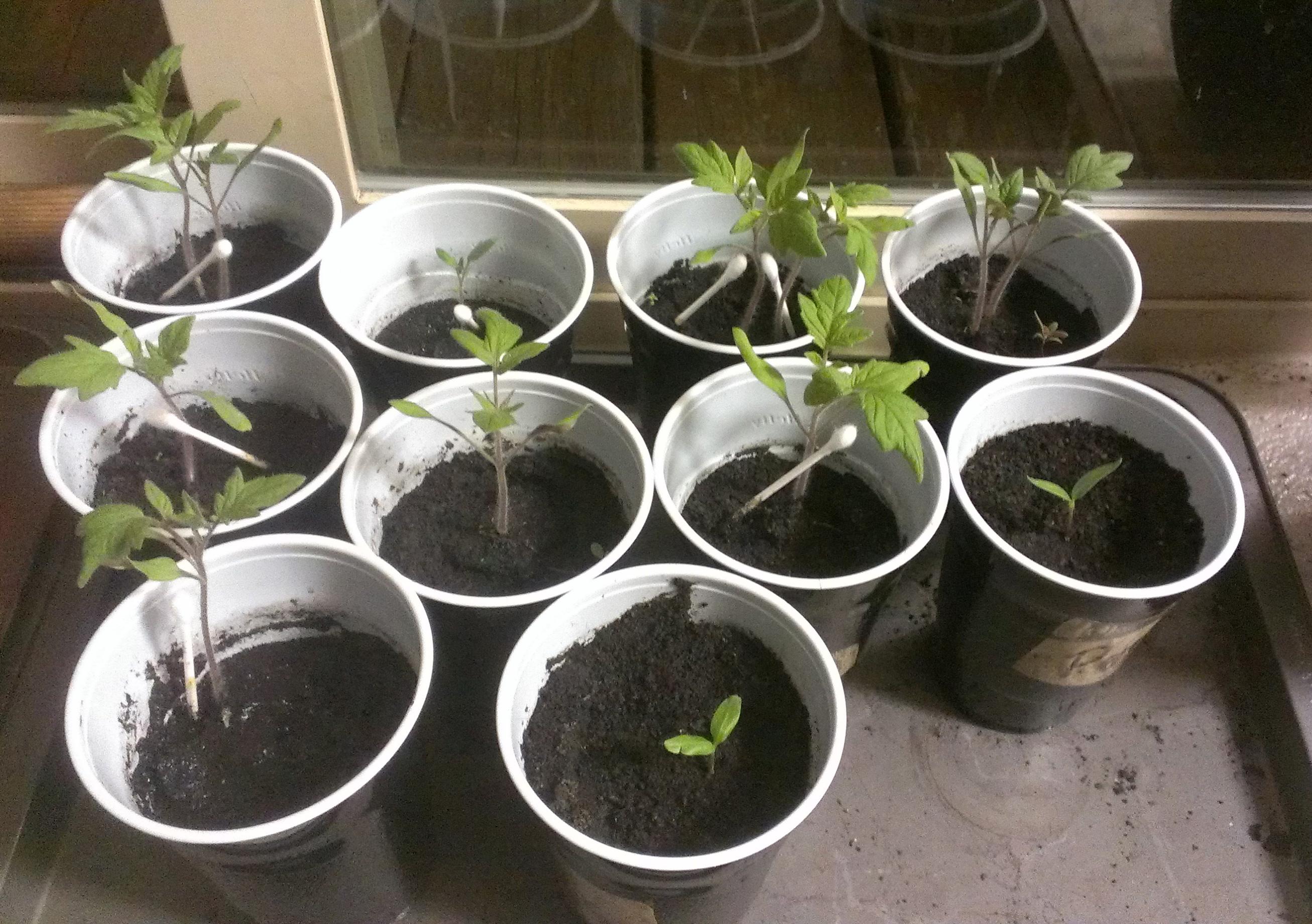 Kelp4less Seedlings