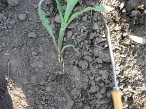dry_soil_plant
