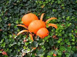 The Pumpkin spider - awwww yeah!