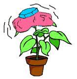 sick plant