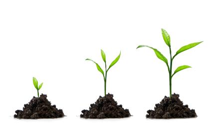 how to start seedlings kelp4less