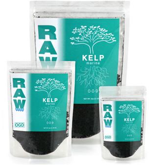 Raw Kelp