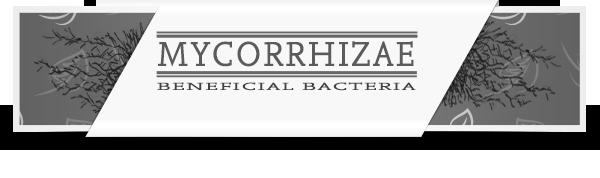 Mycorrhizae-Category-Layout-Root-Enhancement