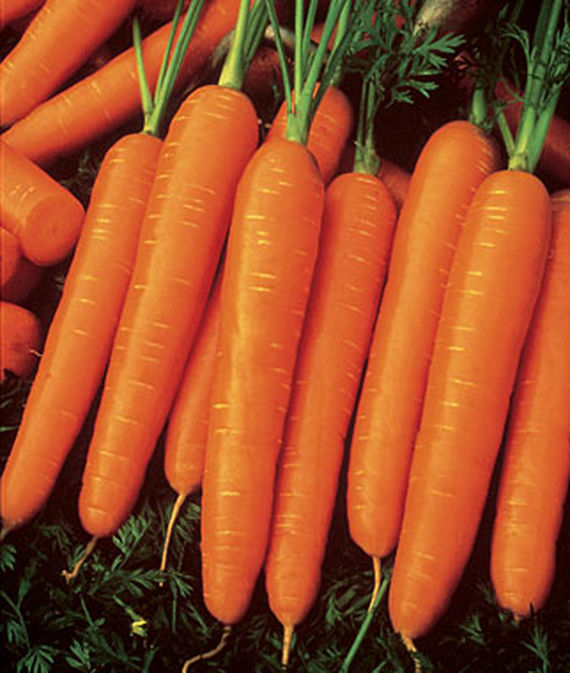 Carrot-Seed