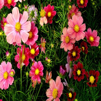 Flower-Seed