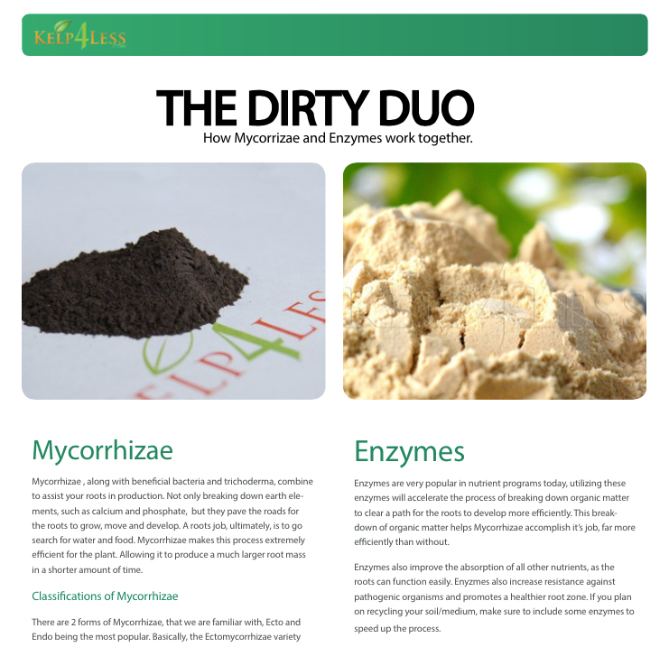 The-Dirty-Duo