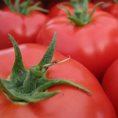 Tomato-Seed