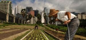 urban_agriculture_530_01