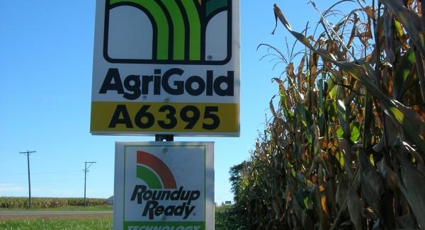 GMOCorn.Ethanol