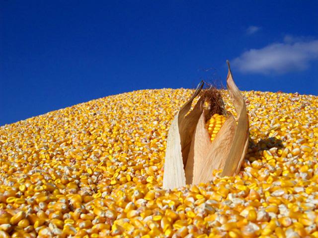 CornPiles