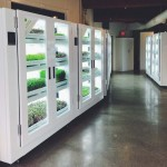 The Future of Food – A Grocery Store That Has a Controlled-Environment Farm