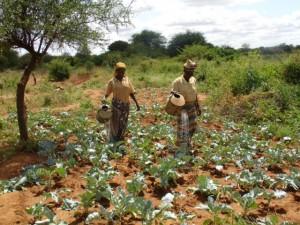 SubsistenceAfricanFarmers