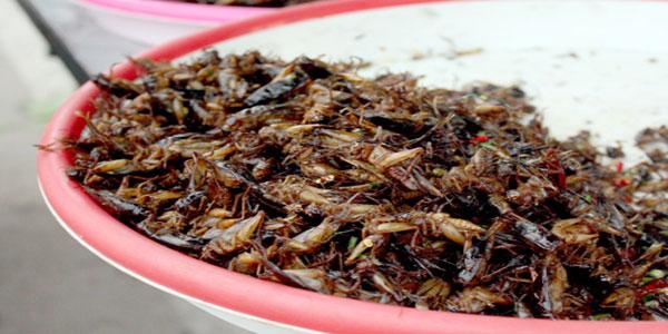 crickets-protein
