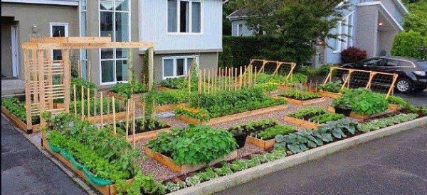 grow-food-not-lawns-grass-soil