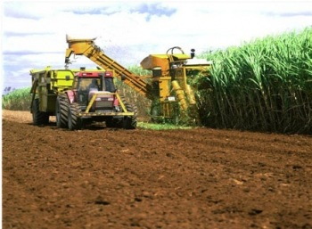 agricultural_sugar__Sudan
