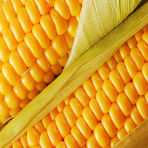 Corn-Growers-Guide