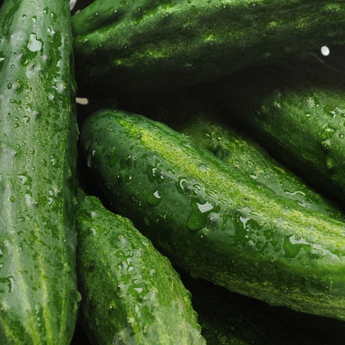 Cucumber-Grower-Guide