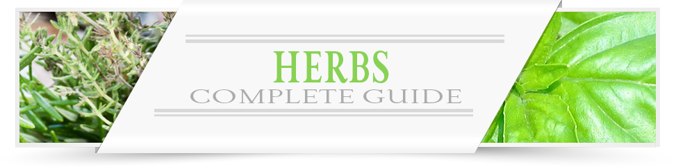 Herbs-Category-Layout