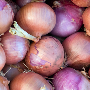 Onions-Growers-Guide