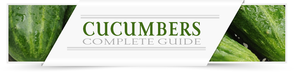 Cucumbers Grower Guide