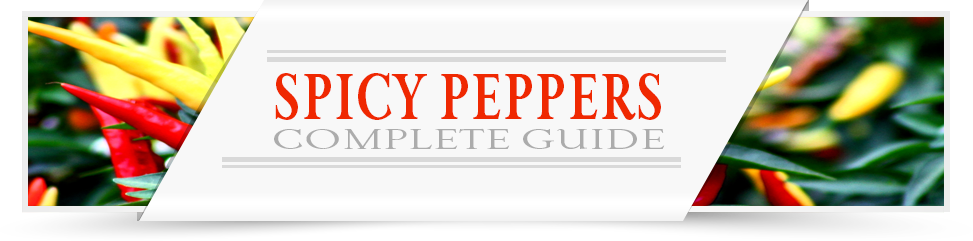 Spicy-Peppers-Category-Layout