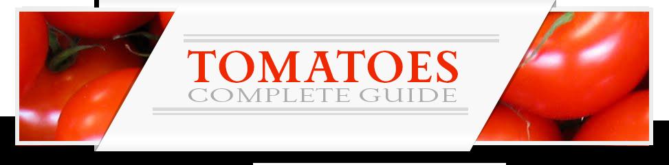 tomato-category-layout