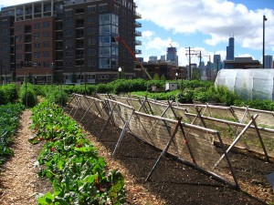 Chicago Urban FArm (photo - Linda - licensed under creative commons attribution 2.0 generic