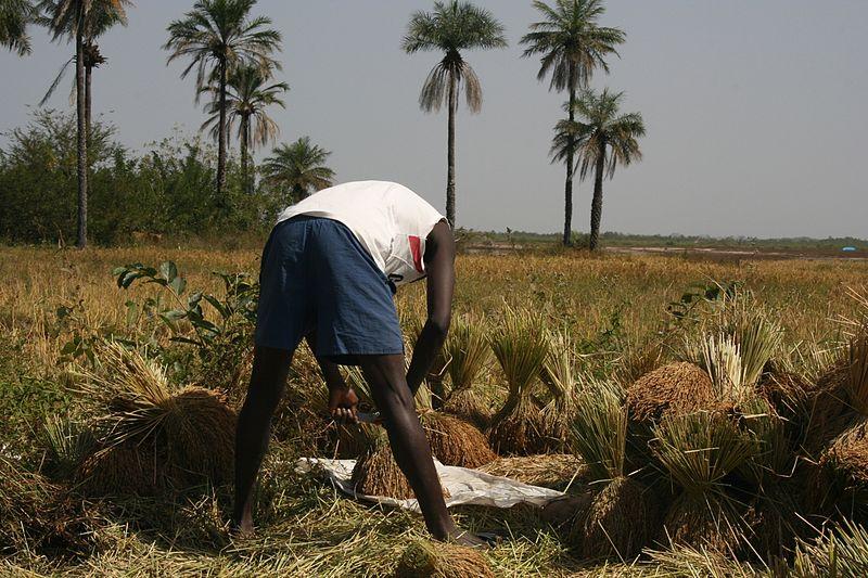 FarmingInAfrica