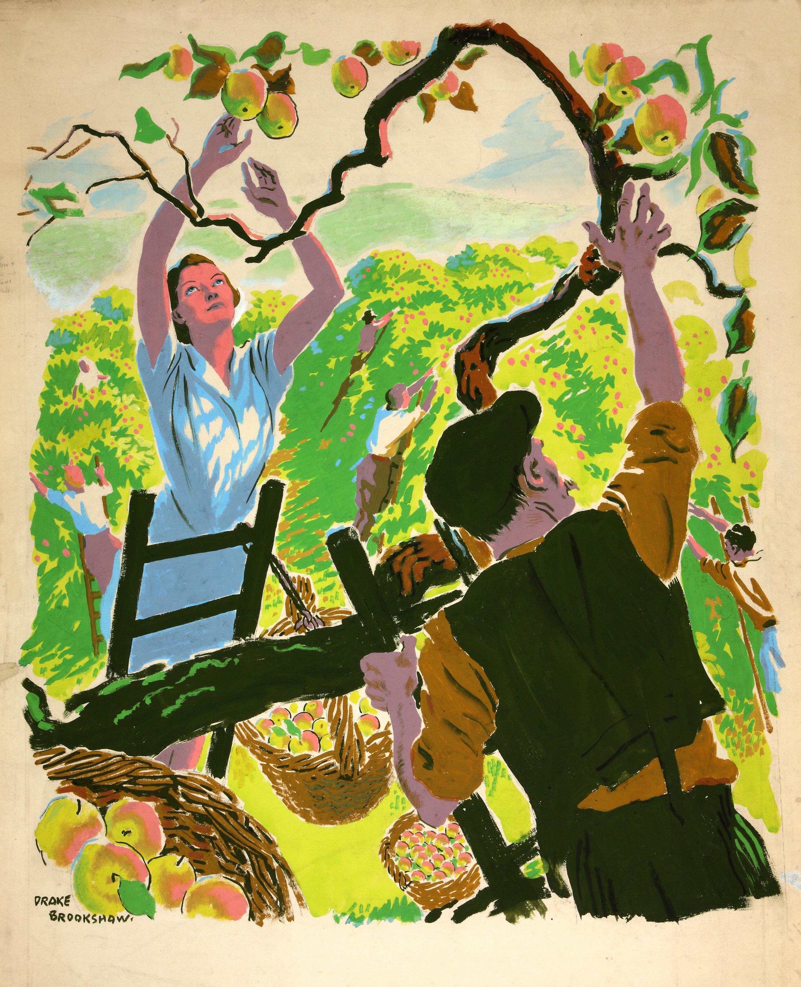 INF3-109_Food_Production_Apple_picking_Artist_Drake_Brookshaw