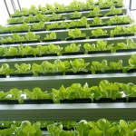 A Global First – Sky Urban Vertical Farming System