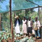 Kenyan KitchenGarden