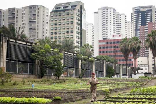 venezuela_urban_farm