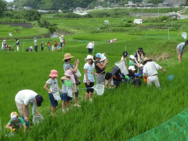 20100805-biodiversity-rice-field-japan