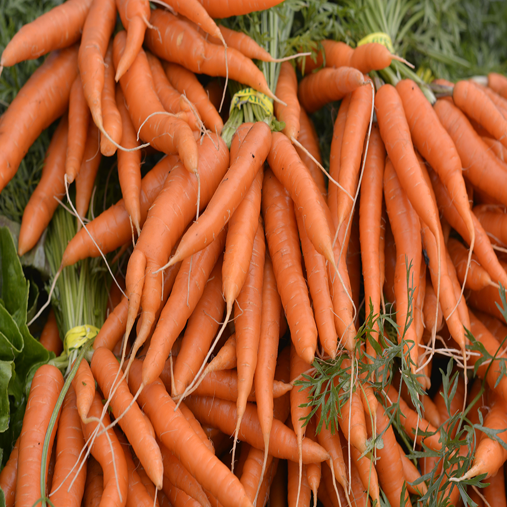 Carrot Growers Guide