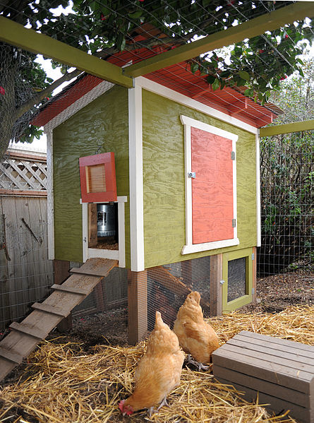 445px-Seattle_Chicken_Coop_and_2_Hens