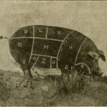 Agriculture;_a_text_for_the_school_and_the_farm_(1921)_(14767789064)