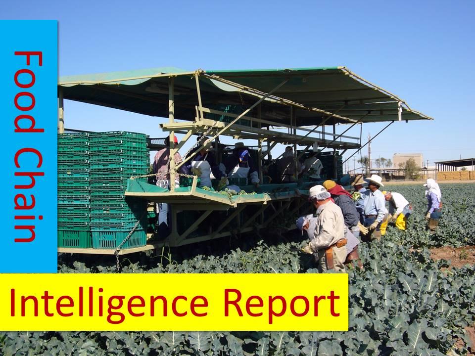 foodchainintelligencereport