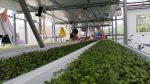 The Growing Art of Urban Food