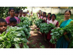 Vadavalli – School Garden