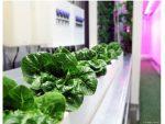 Vet Veggies – Another Uplifting Story