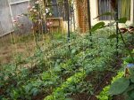 Making the World a Better Place – Urban Agriculture