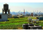Brooklyn Grange – World's Largest Rooftop Farmers