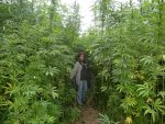 Hemp – the New Small Farm Model