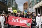 New GMO Labels Have No GMO Warning