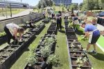 Growing Food – A Platform for Social Reform