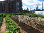 Does Your City Need Urban Agriculture Zones?