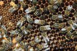 Hope For Saving the Bees & Saving Food