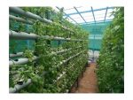 Six Thousand Plants in 80 Square Feet